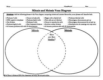 venn diagram on mitosis and meiosis koran ayodhya co steps of mitosis diagram mitosis and meiosis venn diagram by a thom ic science tpt