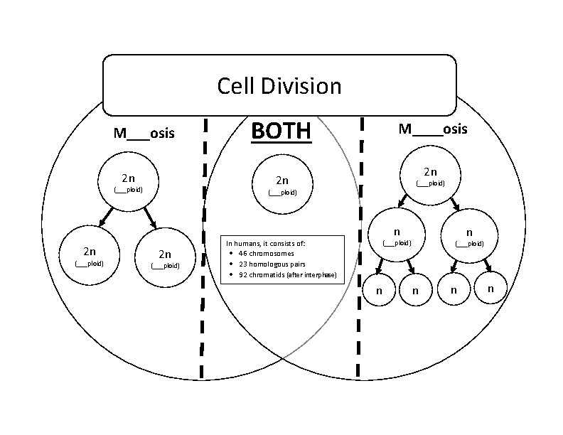 Mitosi Cell Diagram