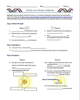 Mitosis and Meiosis Webquest (Outline/Comprehension ...