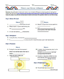 Mitosis and Meiosis Webquest (Outline/Comprehension Questions)