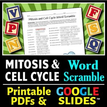 Mitosis and the Cell Cycle Word Scramble - Terminology Review Worksheet