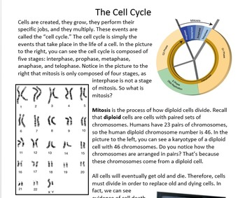 Mitosis and the Cell Cycle reading packet