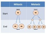 Mitosis vs. Meiosis Animation and worksheets (new and improved)