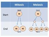 Mitosis vs. Meiosis Animation PowerPoint