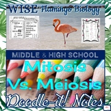 Mitosis vs. Meiosis Doodle Notes - 2 pages!