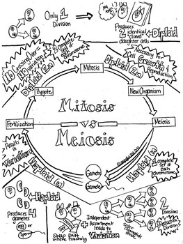 Mitosis vs.Meiosis Sketch Notes W/Teacher's Guide & Student Notes!--UPDATED!