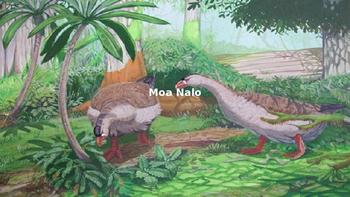 Moa Nalo