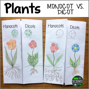 Mocot vs  Dicot Plants Foldable Activity