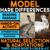 Model Adaptations of Hare Species in Different Habitats - Science Station