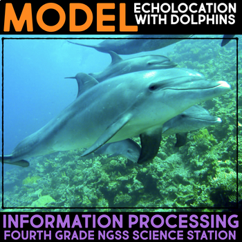 Model Echolocation by Studying Dolphins - Information Processing