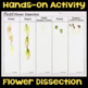 Model Flower Dissection - Science Station