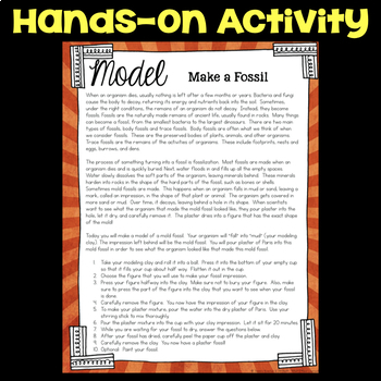 Model Making a Fossil - Plants & Animals Long Gone Science Stations
