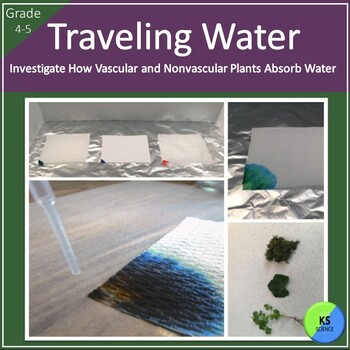 Model Water Transportation in Vascular and NonVascular Plants for 4th/5th Grade