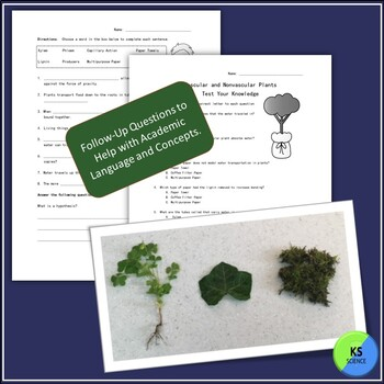 Model Water Trasportation in Vascular and Nonvascular Plants for 2nd/3rd Graders
