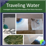 Vascular and Nonvascular Plants: Investigate Water Transportation 2nd/3rd Grade