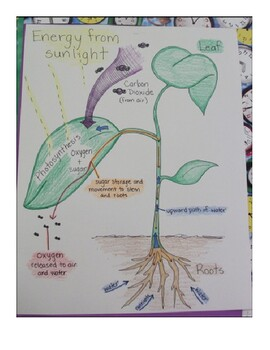 Model of Photosynthesis mini-poster