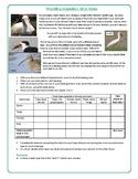 Modeling Adaptation using Bird Beaks