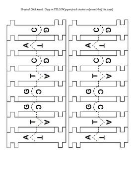 Modeling DNA Replication