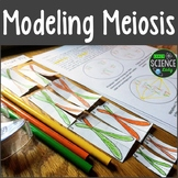 Modeling Meiosis