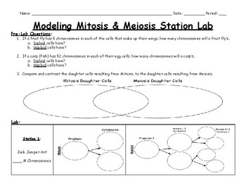 Modeling Mitosis & Meiosis Station Lab