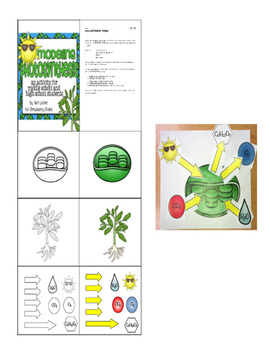 Modeling Photosynthesis:  A Cut and Paste Model of Chloroplasts in Action