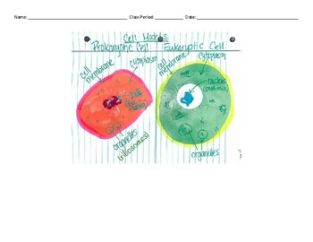 Modeling Prokaryotic and Eukaryotic Cells