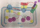 Modeling the Electron Transport Chain