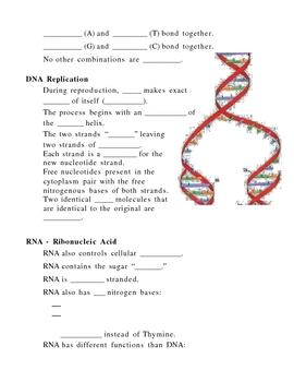 Modern Genetics Notes Outline Lesson Plan