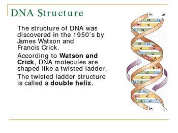 Modern Genetics PowerPoint Presentation Lesson Plan