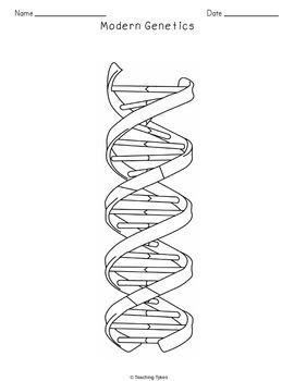 Modern Genetics Crossword Puzzle