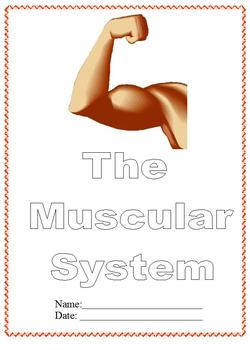 Modified Anatomy Notes/Questions; Muscular System Unit,Differentiated Special Ed