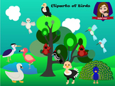 Modified Lessons Clipart of Birds (Colored and BW)