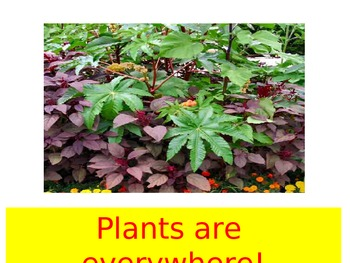 All About Plants; A modified Science textbook