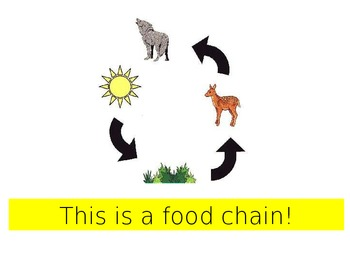 The Food Chain; A modified Science textbook