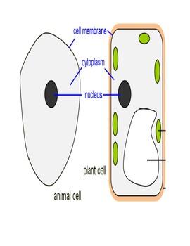 Modified Unit : Plant Cells vs. Animal Cells