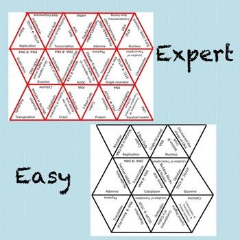 Molecular Genetics Puzzle