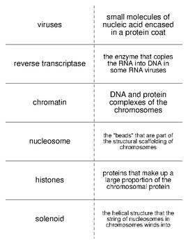 Molecular Genetics Vocabulary Flash Cards for Zoology
