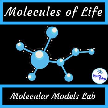 Molecular Models Lab - Molecules of Life