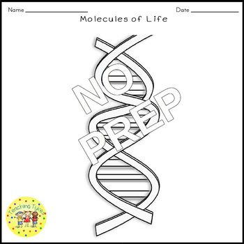 Molecules of Life Science Crossword Puzzle Coloring Worksheet Middle School