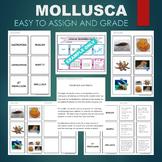 Mollusk - Mollusca (Bivalve, Gastropod, Cephalopod, etc) S