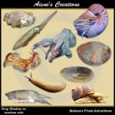 Molluscs Real Photo Clip Art