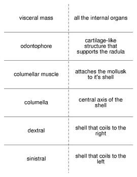 Molluscs Vocabulary Flash Cards for Invertebrate Biology