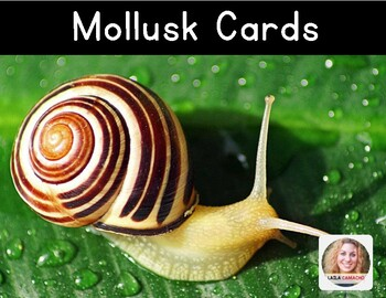 Mollusk Cards (Snails)
