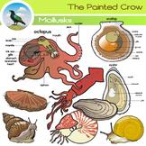 Mollusk Clip Art Set - Octopus - Squid - Snails - Bivalves