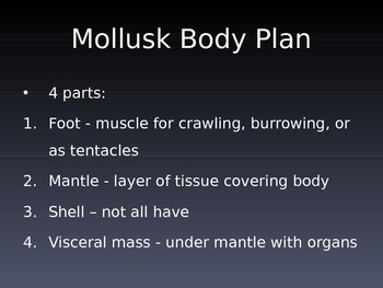Mollusk PowerPoint