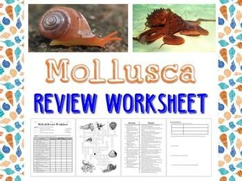 mollusk review worksheet for biology or zoology tpt. Black Bedroom Furniture Sets. Home Design Ideas