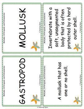 Mollusks Arthropods Echinoderms Vocabulary Cards