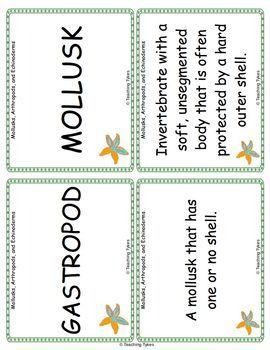Mollusks Arthropods Echinoderms Vocabulary Cards