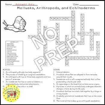 Mollusks Arthropods Echinoderms Science Crossword Puzzle Coloring Middle School