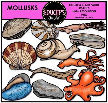 Mollusks Clip Art Bundle {Educlips Clipart}